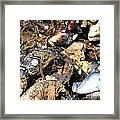 Mussels Framed Print