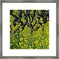 Mustard And Old Vines Framed Print