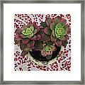 My Garden Series - Mosaica Framed Print