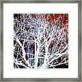 My Neighbor's Tree II Framed Print
