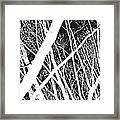 Mystic Forest Framed Print by Steven Milner