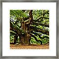 Mystical Angel Oak Tree Framed Print