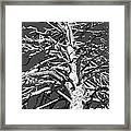 Naked And Barren Framed Print