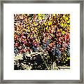 Napa Fall Grapes Framed Print