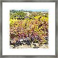 Napa Valleys Best Framed Print