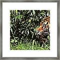 National Zoo - Tiger - 011312 Framed Print