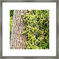 Natural Attachment Framed Print