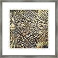 Nature Abstract 2 Framed Print