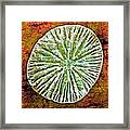Nature Abstract 5 Framed Print