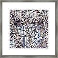 Nature And Texture Framed Print