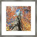 Nature In Art Framed Print