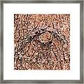 Nature's Abstract Eye Framed Print