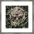 Nature's Bond Framed Print