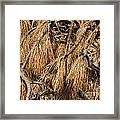 Nature's Brooms Framed Print