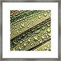 Nature's Colours Framed Print