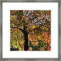 Nature's Goddess Framed Print by Jocelyne Choquette