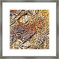 Natures Gold Framed Print
