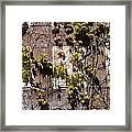 Nature's Mosaic Framed Print