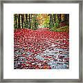 Nature's Red Carpet Framed Print