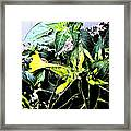 Nature's Trumpet Framed Print