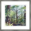 Navarro River Redwoods Framed Print