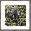 Nest Building Framed Print