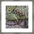 Nets And Knots Number Three Framed Print by Elena Nosyreva