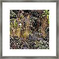 New Growth In A Desolate Area Framed Print