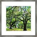 New Orleans City Park - Live Oak Framed Print
