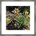 New Yellow Flowers 1 Framed Print