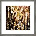 New Zealand Bush Framed Print