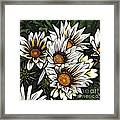 New Zealand Flowering Beauties Framed Print