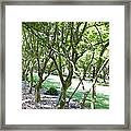 Norfolk Botanical Garden 7 Framed Print