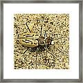 Northern Beach Tiger Beetle Marthas Framed Print