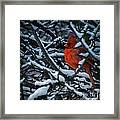 Northern Cardinal In Winter Framed Print