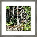 Northern Woods Framed Print