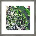 Nosy Komba Banana Palm Framed Print