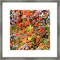 November's Maples Framed Print
