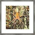 Nursery Web Spider Framed Print