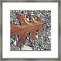 Oak Leaf On Asphalt  Framed Print