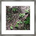 Oak Nursery Framed Print