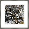 Oak Tree In Winter Framed Print