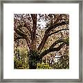 Oak Tree Framed Print