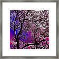 Oaks 6 Framed Print