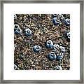 Ocean's Quilt Framed Print