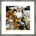 Gold And White Orchids Framed Print