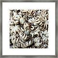 Octopuses Framed Print