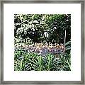 Oil Painting - A Number Of Flamingos Surrounded By Greenery In Their Enclosure  Framed Print