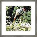 Oil Painting - Mama Stork Feeding Young Framed Print