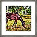 Old Bay Horse Framed Print